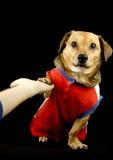 Hond en vijf Royalty-vrije Stock Afbeelding