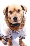Hond en vlinderdas Royalty-vrije Stock Afbeelding