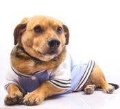 Hond en vlinderdas Royalty-vrije Stock Afbeeldingen
