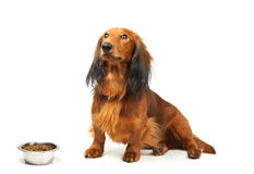 Hond en voedsel Stock Foto's