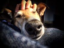 Hond en zijn mens stock foto's