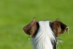 Hond erachter Stock Afbeelding