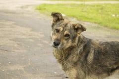 Hond fragment Stock Foto's