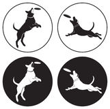 Hond-Frisbee Stock Foto's