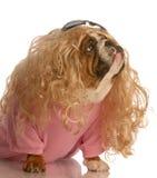 Hond gekleed in belemmering stock afbeeldingen