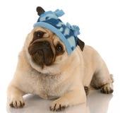 Hond gekleed voor de winter Stock Afbeeldingen