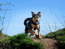 Hond genieten van in openlucht stock foto