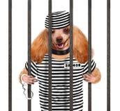 Hond in gevangenis. royalty-vrije stock fotografie