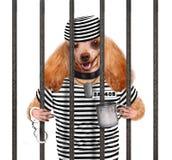 Hond in gevangenis. stock afbeeldingen