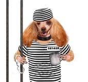 Hond in gevangenis. stock fotografie