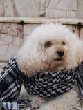 Hond gezet op een sjaal op een granietvloer stock foto's