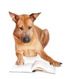 Hond in glazen Stock Foto