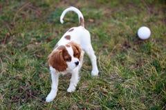 Hond in Gras stock fotografie