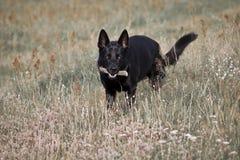 Hond in gras Royalty-vrije Stock Afbeeldingen