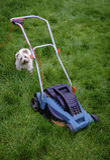 Hond & Grasmaaimachine in Lang Gras Stock Afbeeldingen