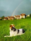 Hond in groen gras die regenboog kijken Stock Foto