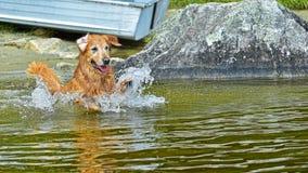 Hond het bespatten rond in het water HDR Royalty-vrije Stock Afbeeldingen
