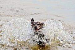 Hond het bespatten in het water royalty-vrije stock afbeelding