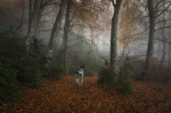 Hond in het bos Stock Foto's