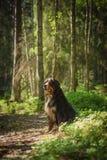 Hond in het bos Stock Foto