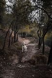 Hond in het bos in werking dat wordt gesteld dat stock foto's