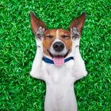 Hond het dromen Stock Afbeelding