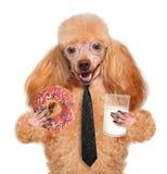 Hond het eten royalty-vrije stock afbeelding