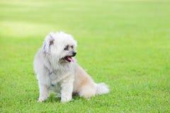 Hond in het gras Royalty-vrije Stock Foto