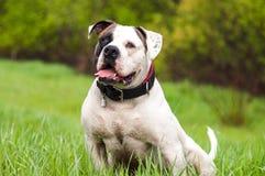 Hond in het gras Royalty-vrije Stock Afbeelding
