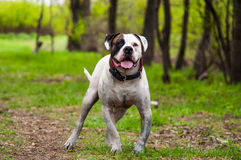 Hond in het gras Stock Fotografie