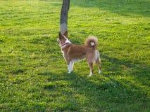 Hond in het groene park royalty-vrije stock foto