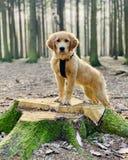 Hond in het hout stock afbeeldingen