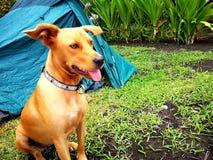 Hond het kamperen stock afbeelding