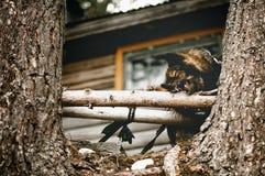 Hond het kauwen op een stok Royalty-vrije Stock Afbeeldingen