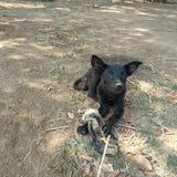 Hond het kauwen van been stock afbeelding