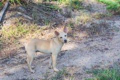 Hond in het kijken actie Stock Foto