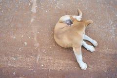 Hond het krassen royalty-vrije stock afbeeldingen