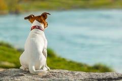 Hond het letten op Stock Foto