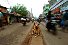 Hond het letten op Royalty-vrije Stock Foto's