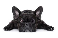 Hond het letten op bij u Royalty-vrije Stock Fotografie
