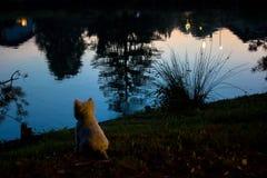 Hond het letten op meer bij zonsondergang Royalty-vrije Stock Foto