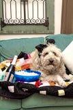 Hond het Letten op Sportevenementen over TV in Dekbed met Popcorn wordt geknuffeld die royalty-vrije stock afbeeldingen