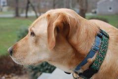 Hond het letten op straat Royalty-vrije Stock Afbeelding