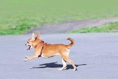 Hond het lopen royalty-vrije stock foto's