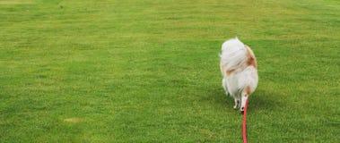 Hond het lopen stock foto