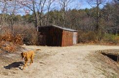 Hond het lopen verleden rustieke loods op sleep Stock Afbeelding