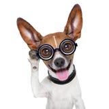 Hond het luisteren Stock Fotografie