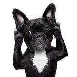 Hond het luisteren Stock Foto