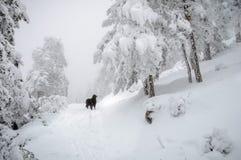 Hond in het midden van het sneeuwbos Royalty-vrije Stock Fotografie