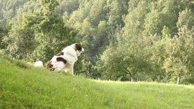 Hond het ontschorsen Stock Afbeeldingen